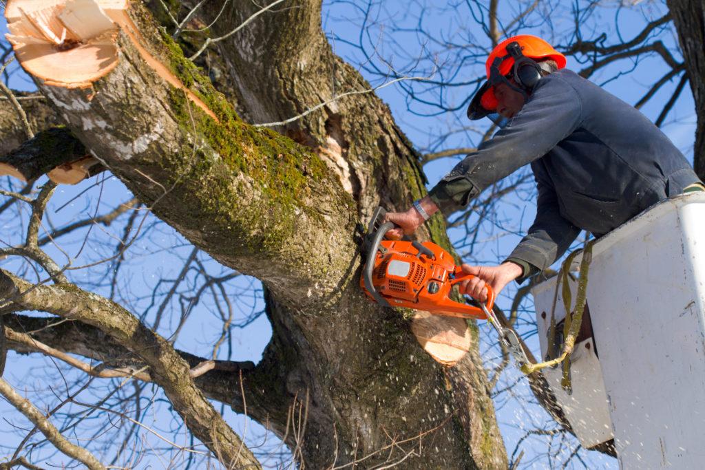 Санитарный уход за деревьями