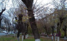 spil-derevev-2