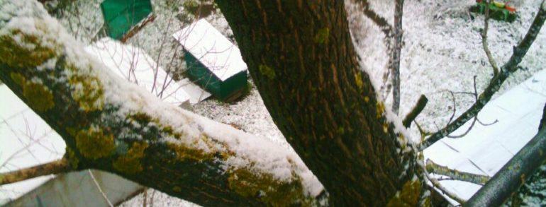 Обрезка деревьев с использованием автовышки