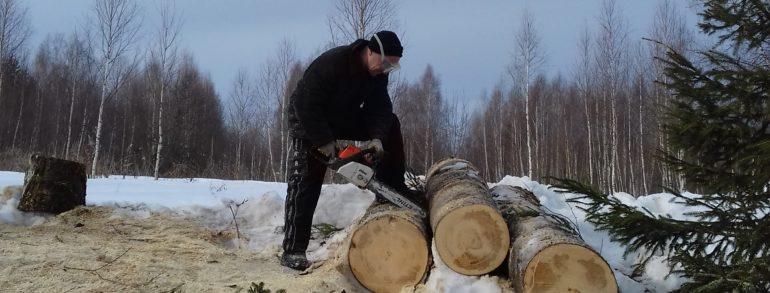 Распил стволов деревьев на дрова ( д. Шиловская)