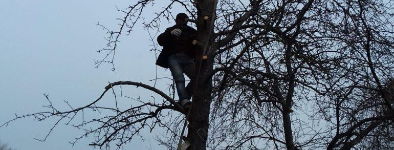 Спил дерева частями со спуском на верёвках и вывоз с утилизацией (ул. Красноярская)